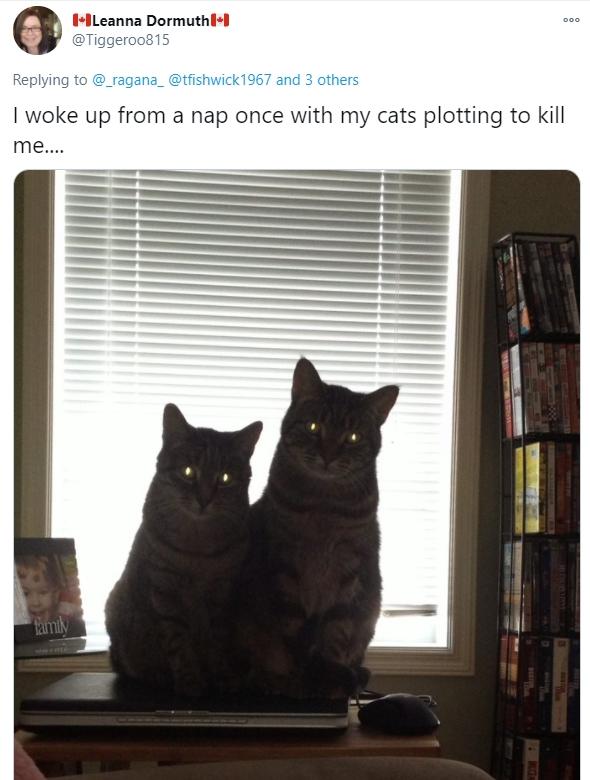 """Thức dậy bỗng dưng thấy cả người đau nhức, cô gái vội kiểm tra camera mới ngỡ ngàng nhận ra mình bị mèo cưng """"trừng phạt"""" cả đêm - Ảnh 8."""