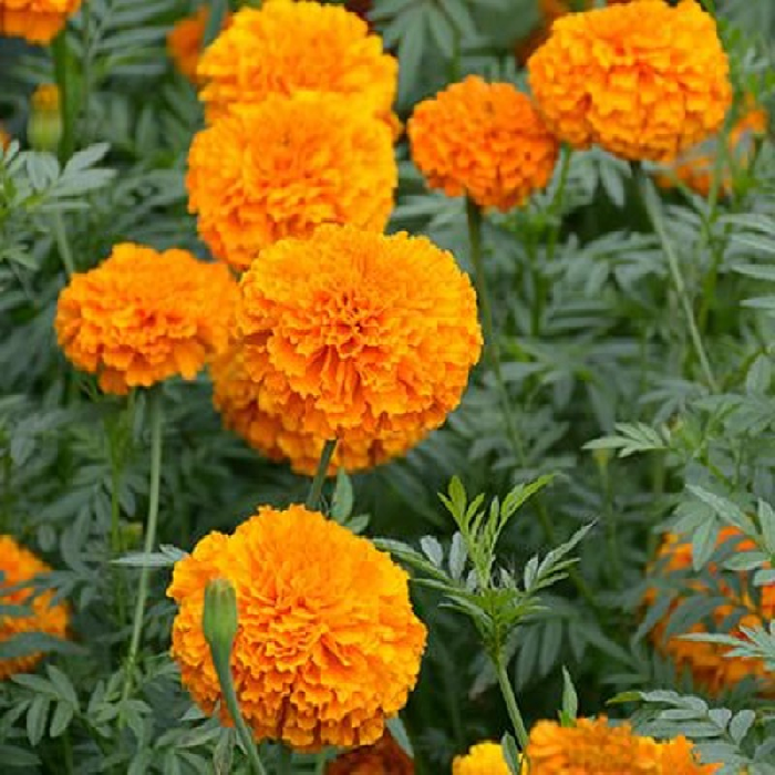 7 loại hoa cúng trên bàn thờ Tết vừa đẹp vừa hợp phong thủy và những kiêng kị khi chọn hoa - Ảnh 9.