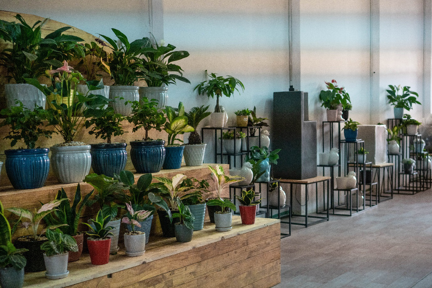 Made4Home Garden Center Bình Dương: Điểm đến mới lí tưởng cho cả gia đình vui chơi và mua sắm - Ảnh 7.