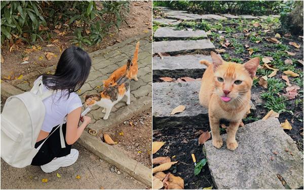 """Chuyện cô gái Sài Gòn cho đàn mèo hoang ăn thu hút nghìn like, dân mạng bất ngờ vì sự """"chứa chấp"""" đầy đáng yêu của lũ thú trong Thảo Cầm Viên"""