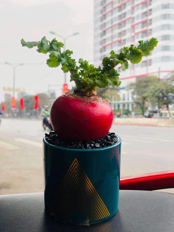 Cận Tết, củ cải đỏ khổng lồ bất ngờ tăng giá gấp đôi trên chợ mạng vì chị em nô nức order trang trí nhà ngày Tết - Ảnh 3.