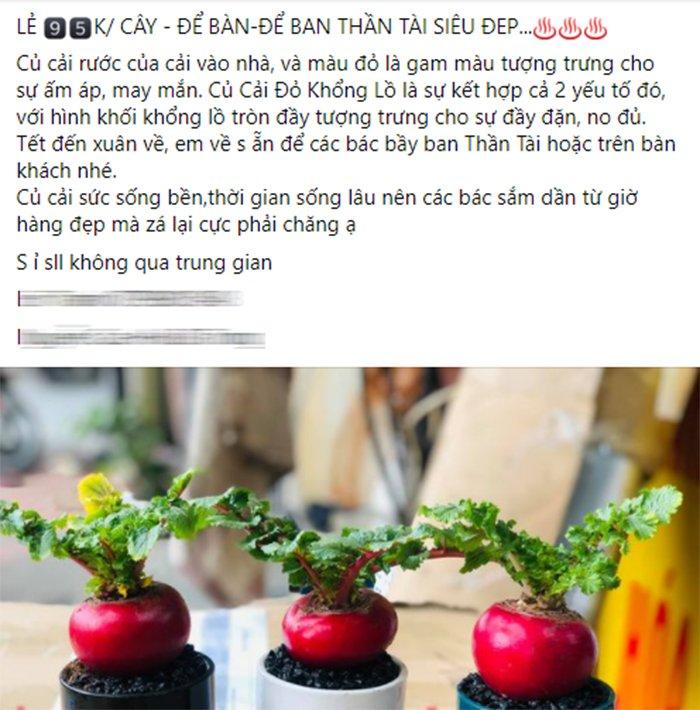 Củ cải đỏ khổng lồ bất ngờ tăng giá gấp đôi trên chợ mạng vì chị em nô nức order trang trí nhà ngày Tết - Ảnh 3.