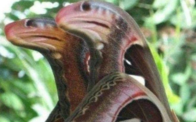 Dân mạng phát hoảng với hình ảnh đôi rắn giống nhau như đúc kỳ lạ, chiêm ngưỡng toàn bộ bức ảnh mới há hốc lần 2