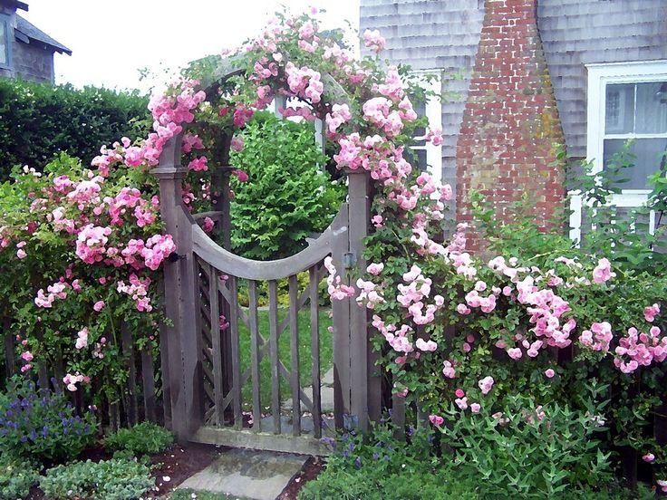 Muốn dễ dàng có một rặng hồng đẹp như mơ thì đừng bao giờ quên 9 điều đơn giản nhưng cực quan trọng này  - Ảnh 5.