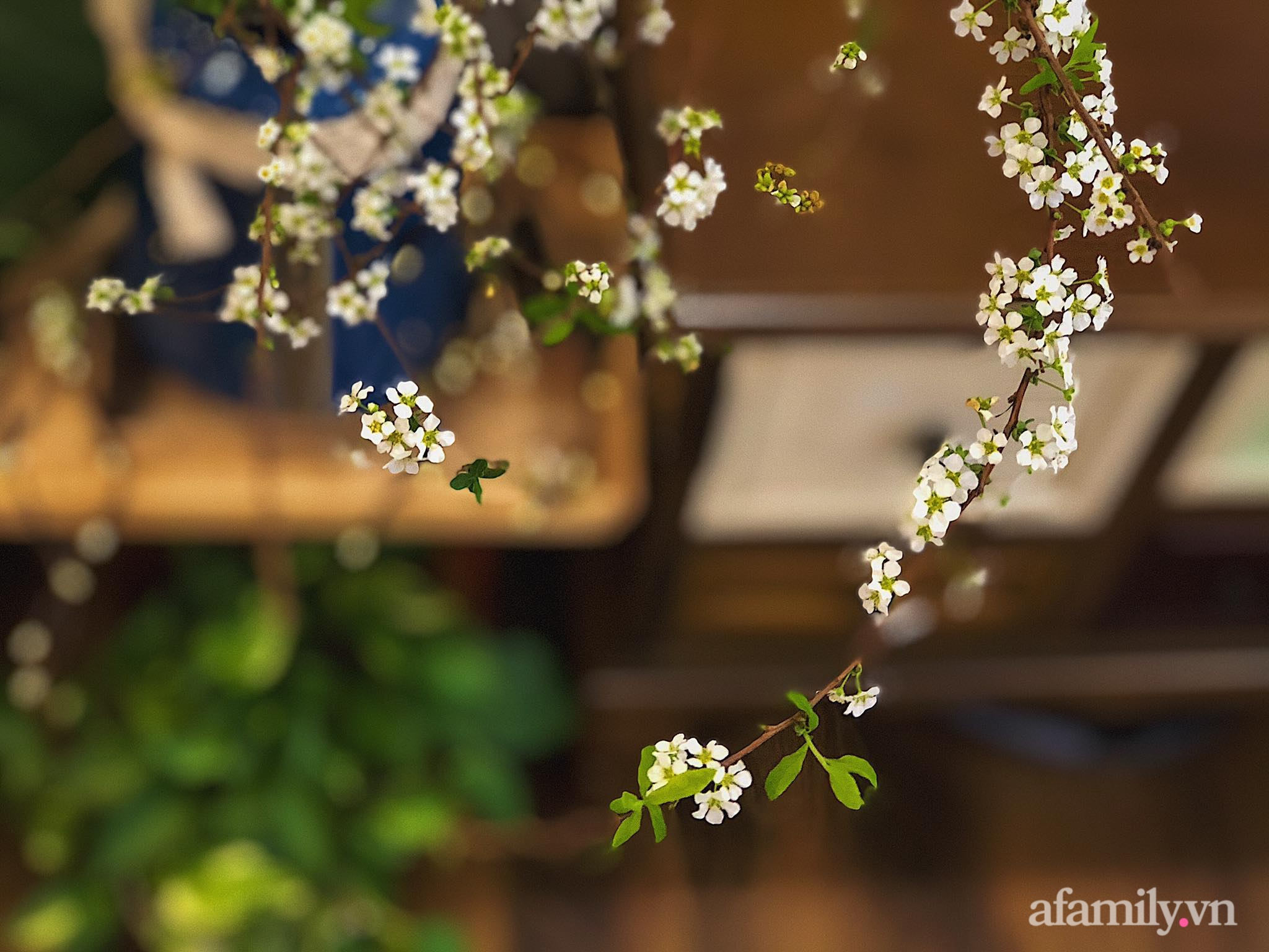 Mẻ đảm Hà Nội khéo mang Tết vào tổ ấm đẹp duyên dáng với gốm và hoa - Ảnh 2.