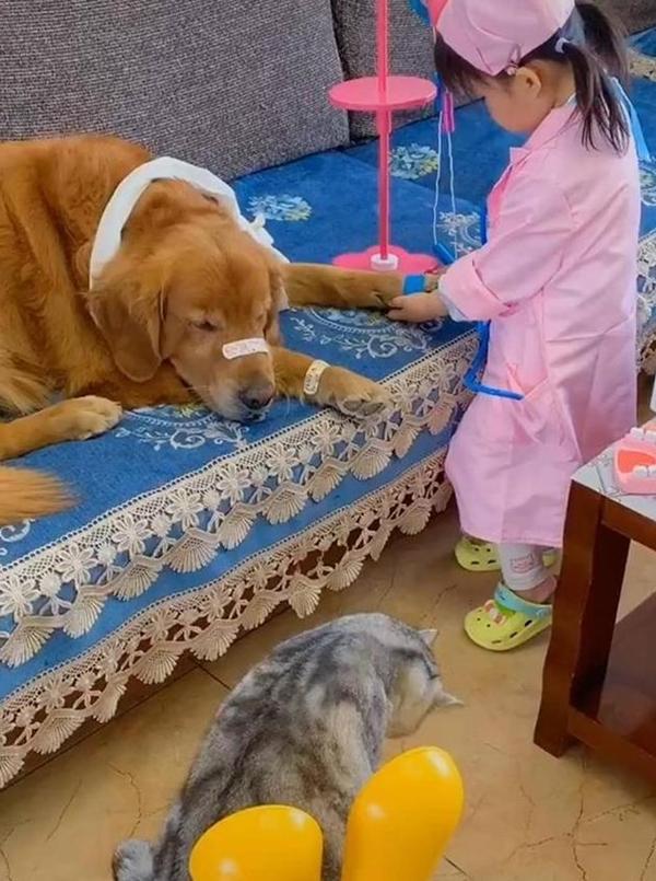 """Con gái đóng vai bác sĩ, nhìn vẻ mặt """"cam chịu số phận"""" của các bệnh nhân mà người xem cười """"rụng răng"""" - Ảnh 1."""