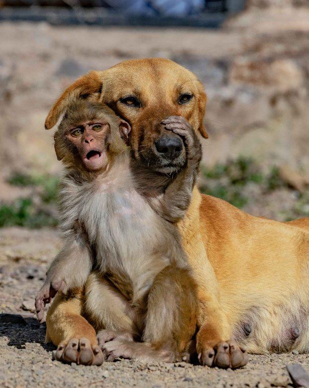 """Đang đi đường tình cờ bắt gặp bộ đôi khỉ chó quấn quýt, nhiếp ảnh gia tìm hiểu càng ngỡ ngàng hơn với mối quan hệ """"mẹ con"""" lạ đời của chúng - Ảnh 2."""
