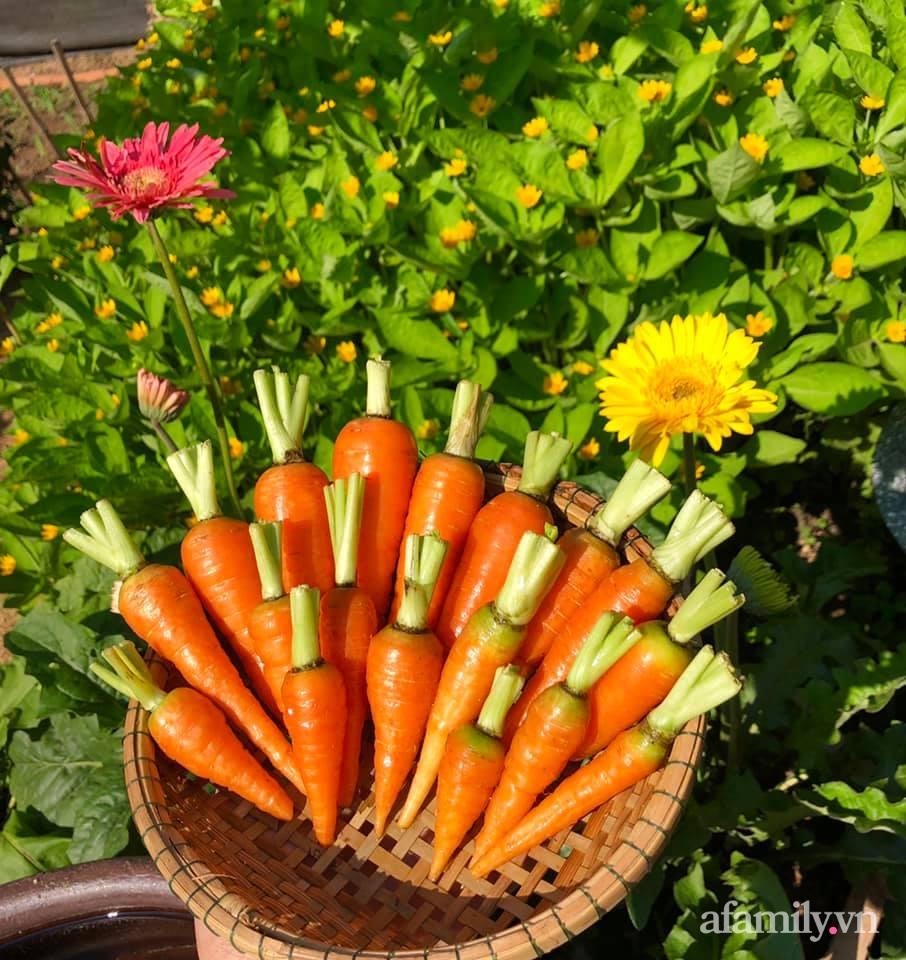 Khu vườn 70m² xanh mát rau quả quanh năm nhờ mẹ đảm mát tay ở Huế - Ảnh 11.