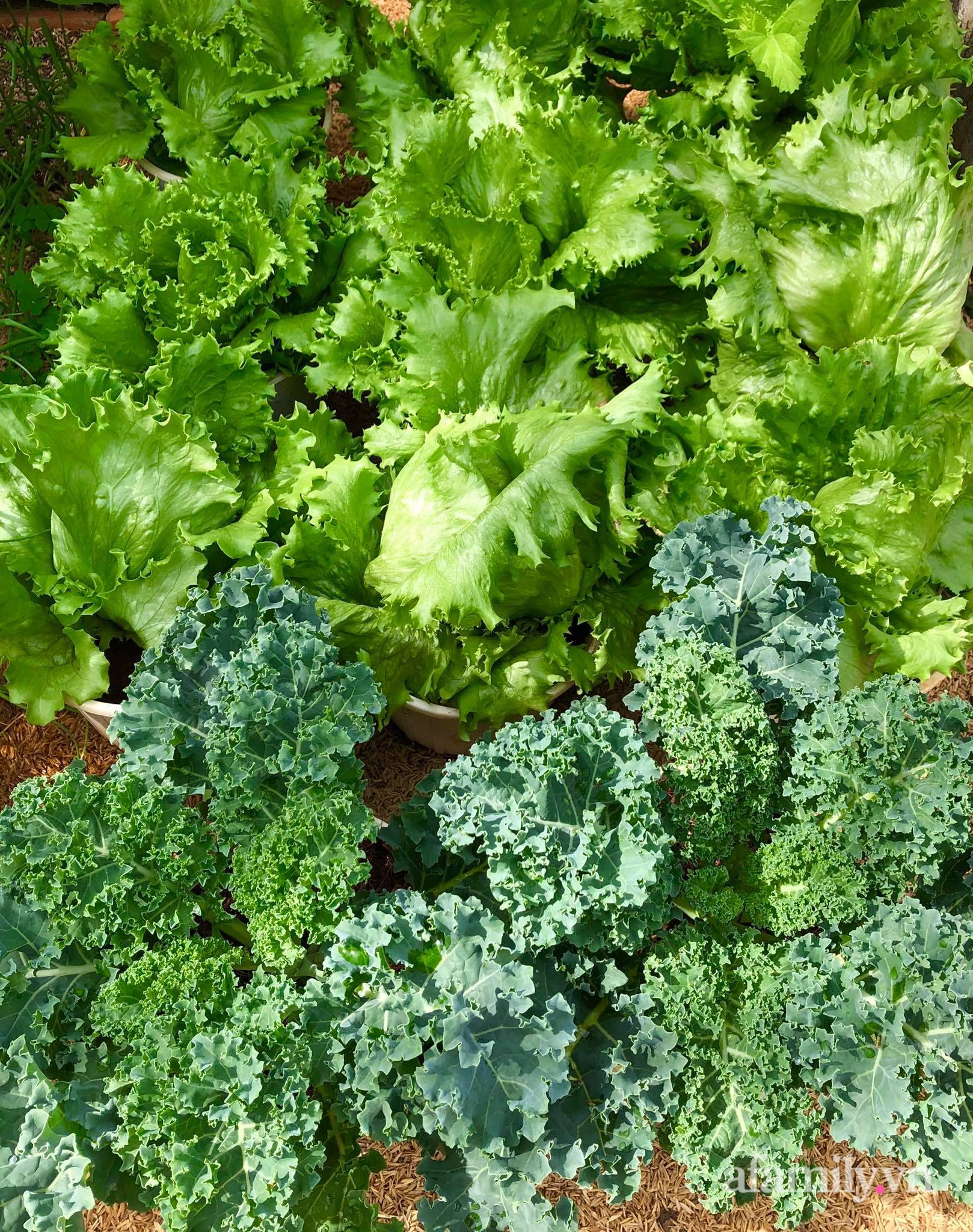 Khu vườn 70m² xanh mát rau quả quanh năm nhờ mẹ đảm mát tay ở Huế - Ảnh 5.