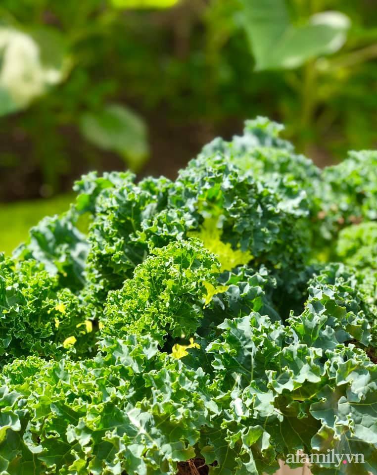 Khu vườn 70m² xanh mát rau quả quanh năm nhờ mẹ đảm mát tay ở Huế - Ảnh 16.