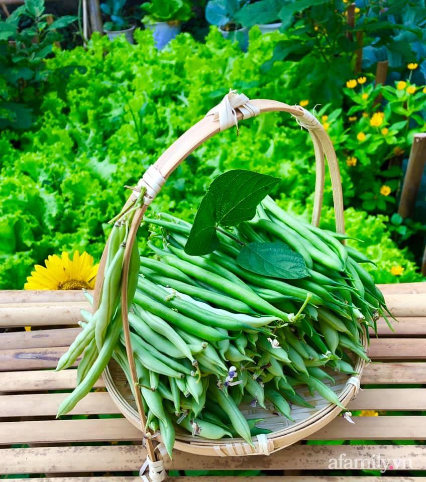 Khu vườn 70m² xanh mát rau quả quanh năm nhờ mẹ đảm mát tay ở Huế - Ảnh 10.
