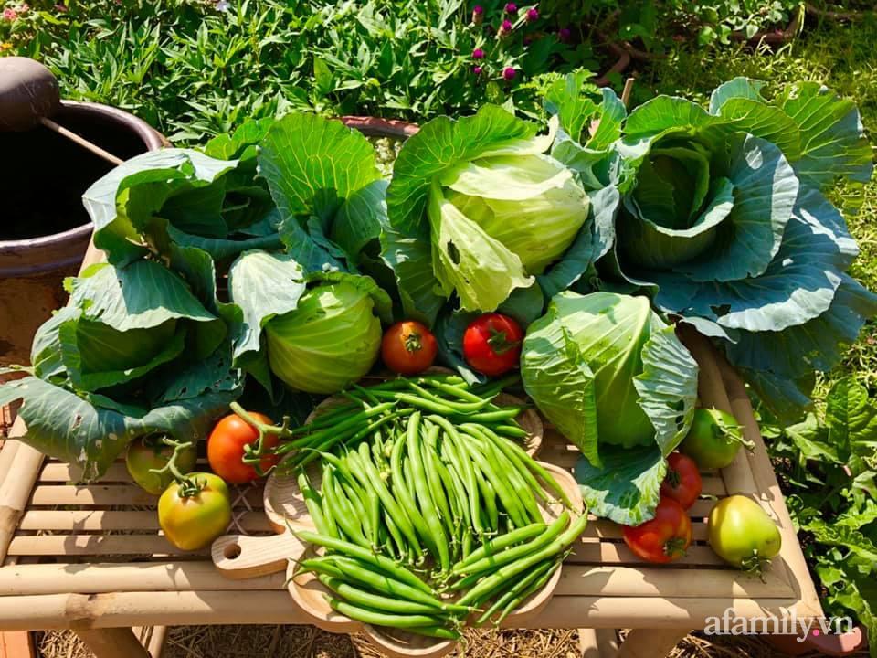 Khu vườn 70m² xanh mát rau quả quanh năm nhờ mẹ đảm mát tay ở Huế - Ảnh 9.