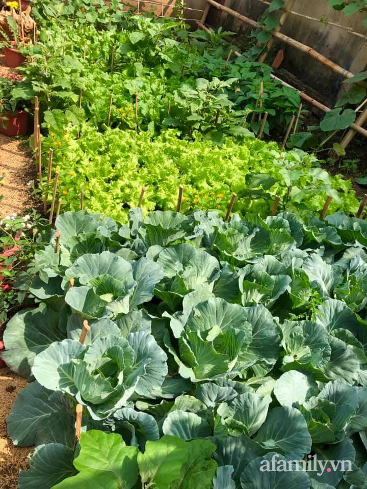 Khu vườn 70m² xanh mát rau quả quanh năm nhờ mẹ đảm mát tay ở Huế - Ảnh 8.