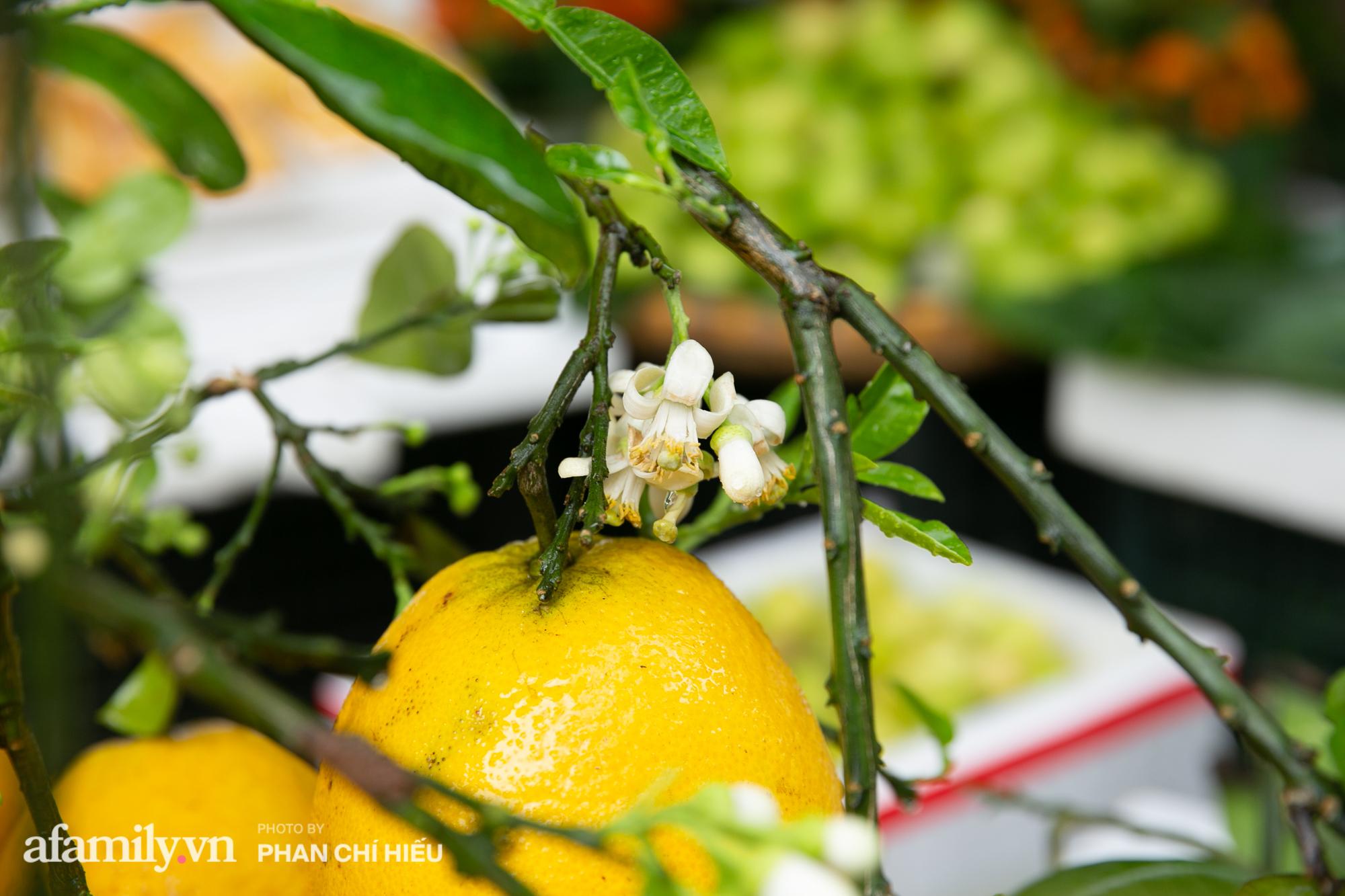 Hàng bưởi Diễn da vàng óng có từng búi hoa tươi trở thành món hàng siêu độc trên chợ nhà giàu Hà Nội, tận 100k/quả, bà chủ thu cả chục triệu mỗi ngày!  - Ảnh 3.