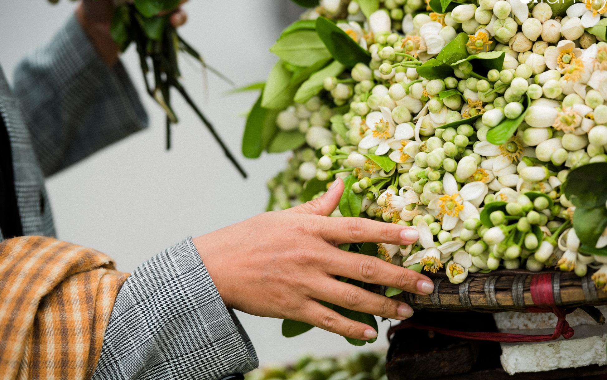 """Hoa bưởi thơm ngào ngạt, giá từ 200.000/kg và cách lựa hoa """"chuẩn chỉnh"""""""