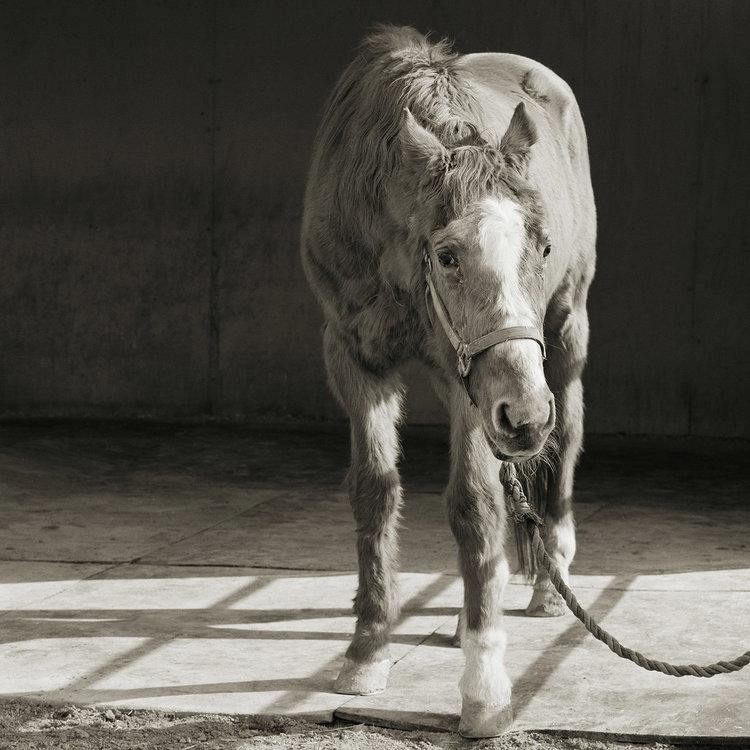 """Chùm ảnh """"những con vật được cho phép sống đến già"""" gây cảm giác ám ảnh lạ kỳ, khi những mảnh đời ngắn ngủi được """"ban tặng"""" sự sống buồn tủi - Ảnh 9."""