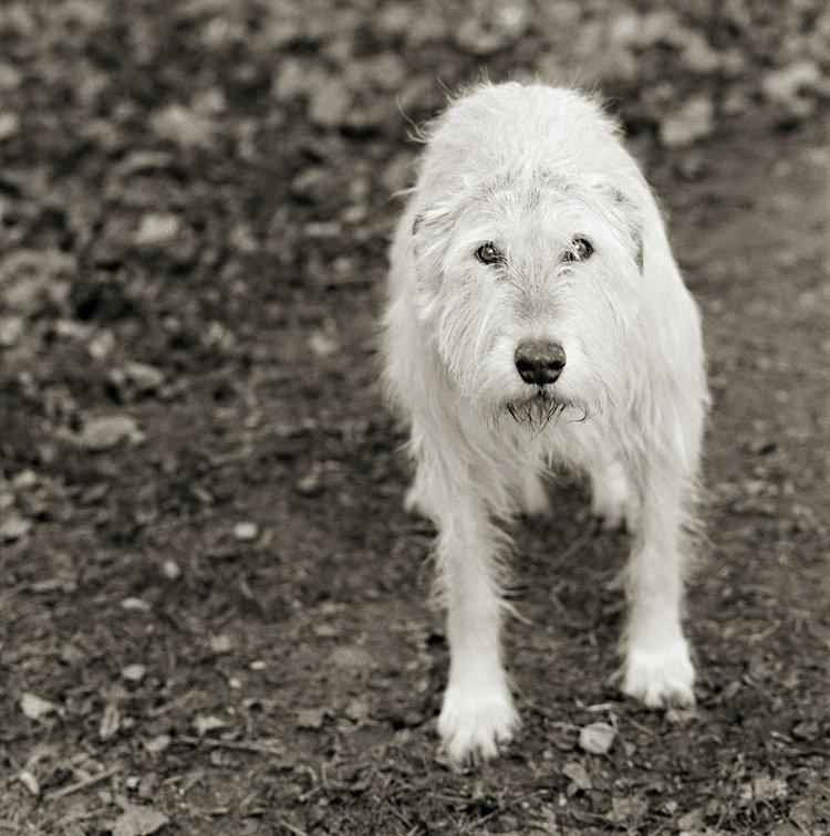 """Chùm ảnh """"những con vật được cho phép sống đến già"""" gây cảm giác ám ảnh lạ kỳ, khi những mảnh đời ngắn ngủi được """"ban tặng"""" sự sống buồn tủi - Ảnh 11."""