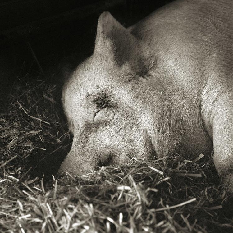 """Chùm ảnh """"những con vật được cho phép sống đến già"""" gây cảm giác ám ảnh lạ kỳ, khi những mảnh đời ngắn ngủi được """"ban tặng"""" sự sống buồn tủi - Ảnh 13."""
