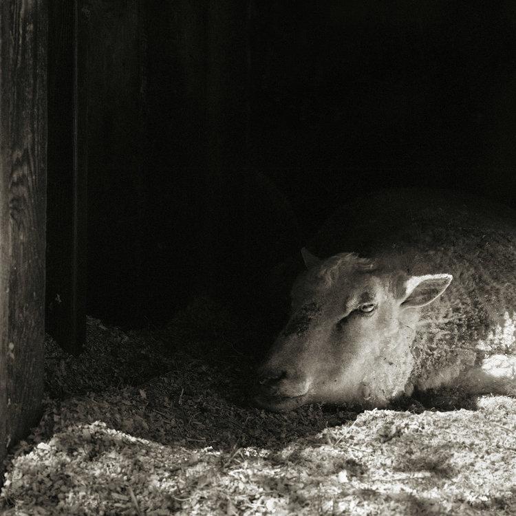 """Chùm ảnh """"những con vật được cho phép sống đến già"""" gây cảm giác ám ảnh lạ kỳ, khi những mảnh đời ngắn ngủi được """"ban tặng"""" sự sống buồn tủi - Ảnh 14."""