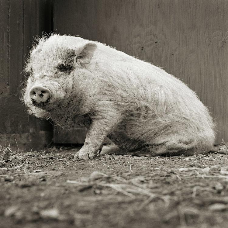 """Chùm ảnh """"những con vật được cho phép sống đến già"""" gây cảm giác ám ảnh lạ kỳ, khi những mảnh đời ngắn ngủi được """"ban tặng"""" sự sống buồn tủi - Ảnh 5."""
