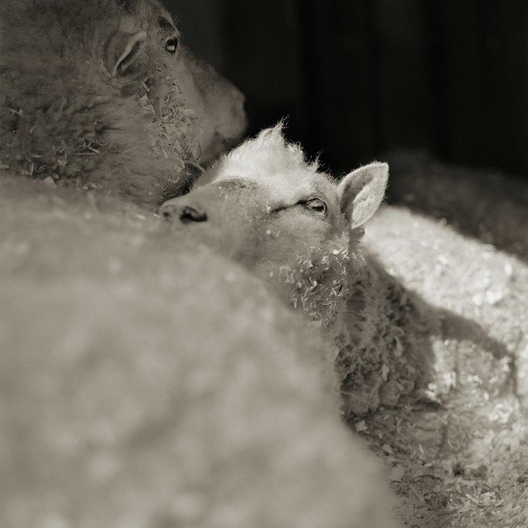 """Chùm ảnh """"những con vật được cho phép sống đến già"""" gây cảm giác ám ảnh lạ kỳ, khi những mảnh đời ngắn ngủi được """"ban tặng"""" sự sống buồn tủi - Ảnh 8."""