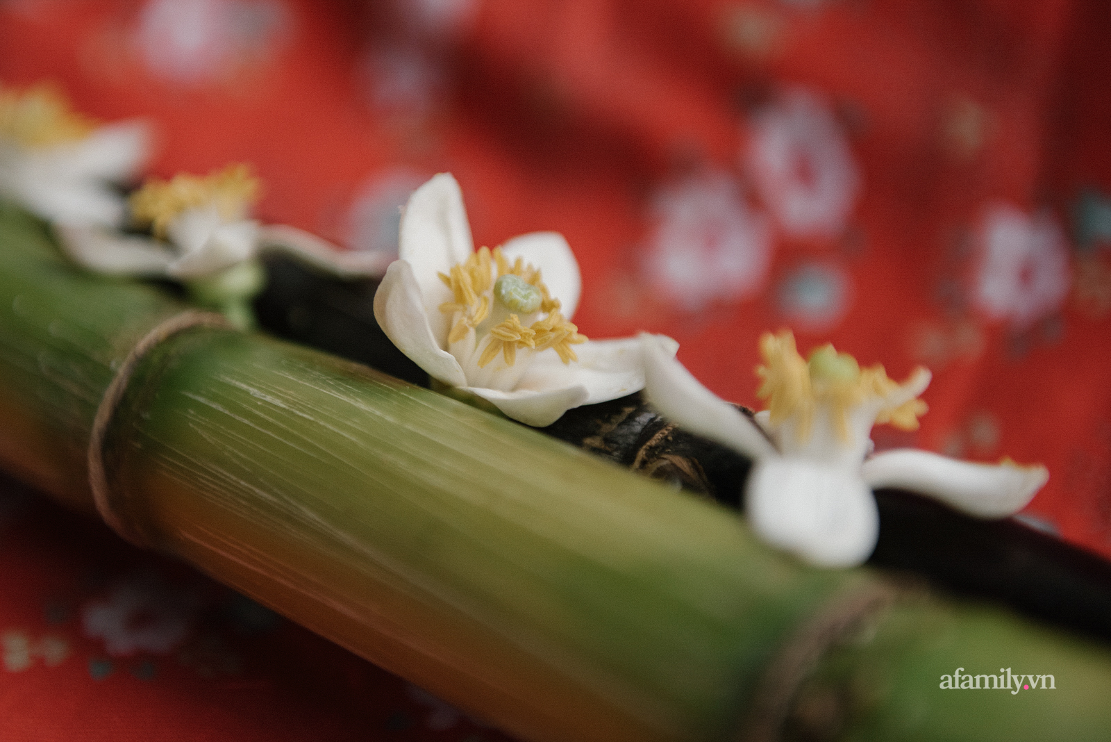 Hoa bưởi và khúc hoan ca với đồ ngọt Hà thành: Không chỉ là ăn, đó là nhâm nhi cả tinh hoa đất trời mùa xuân - Ảnh 8.
