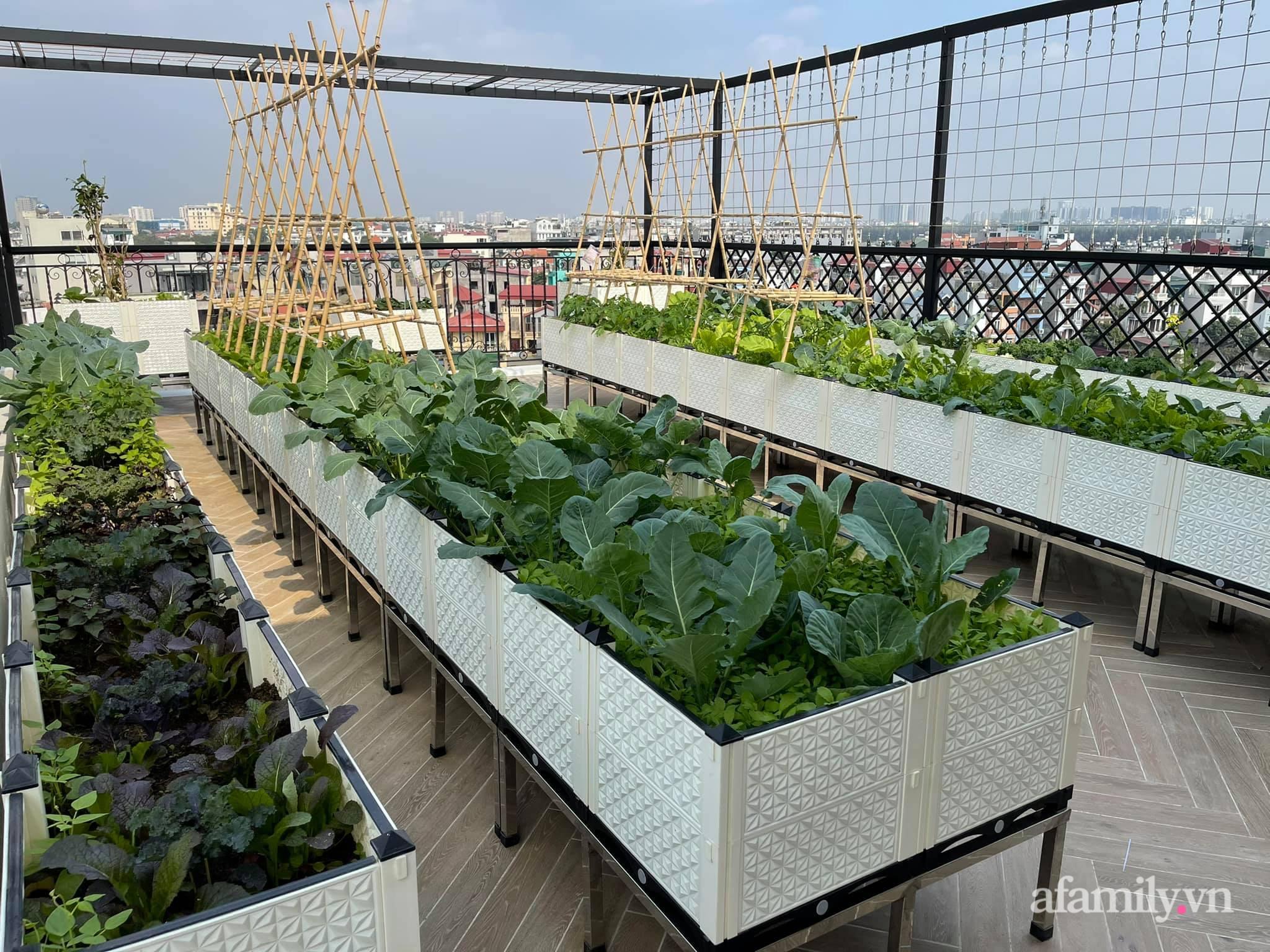 Sân thượng 83m² phủ kín rau quả sạch chỉ sau gần 1 tháng gieo trồng của cô giáo về hưu ở Hà Nội - Ảnh 1.