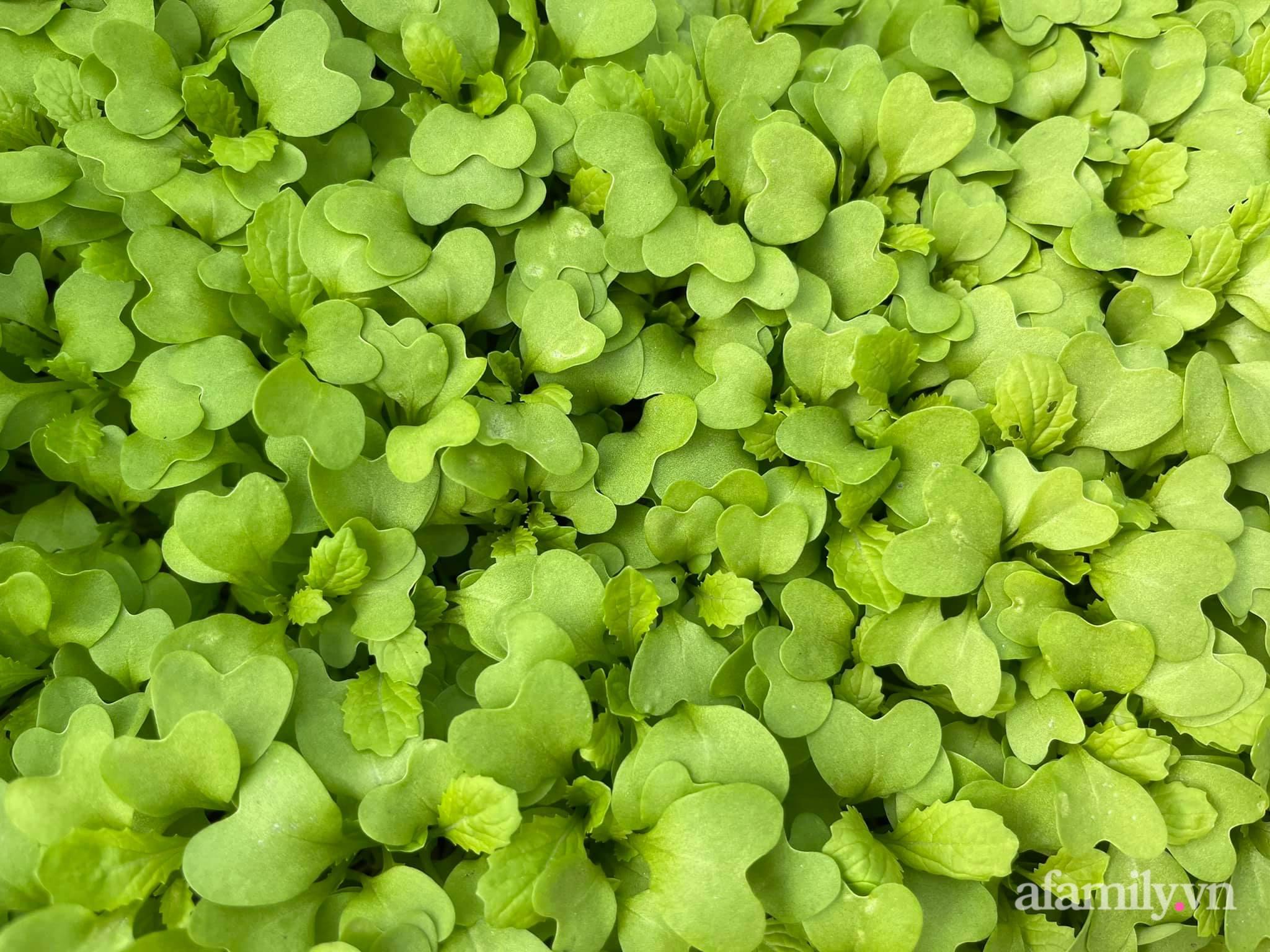 Sân thượng 83m² phủ kín rau quả sạch chỉ sau gần 1 tháng gieo trồng của cô giáo về hưu ở Hà Nội - Ảnh 14.