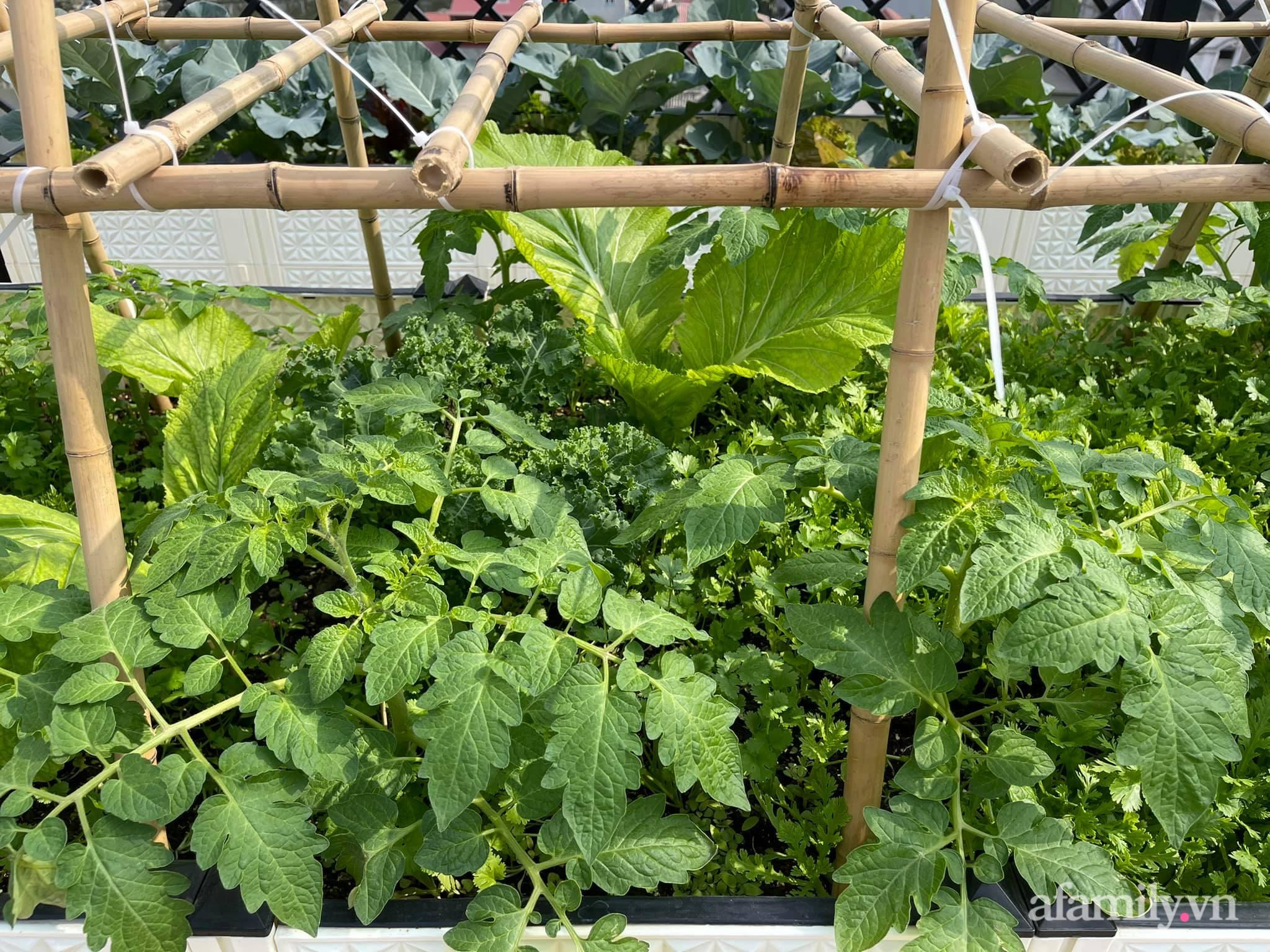 Sân thượng 83m² phủ kín rau quả sạch chỉ sau gần 1 tháng gieo trồng của cô giáo về hưu ở Hà Nội - Ảnh 6.