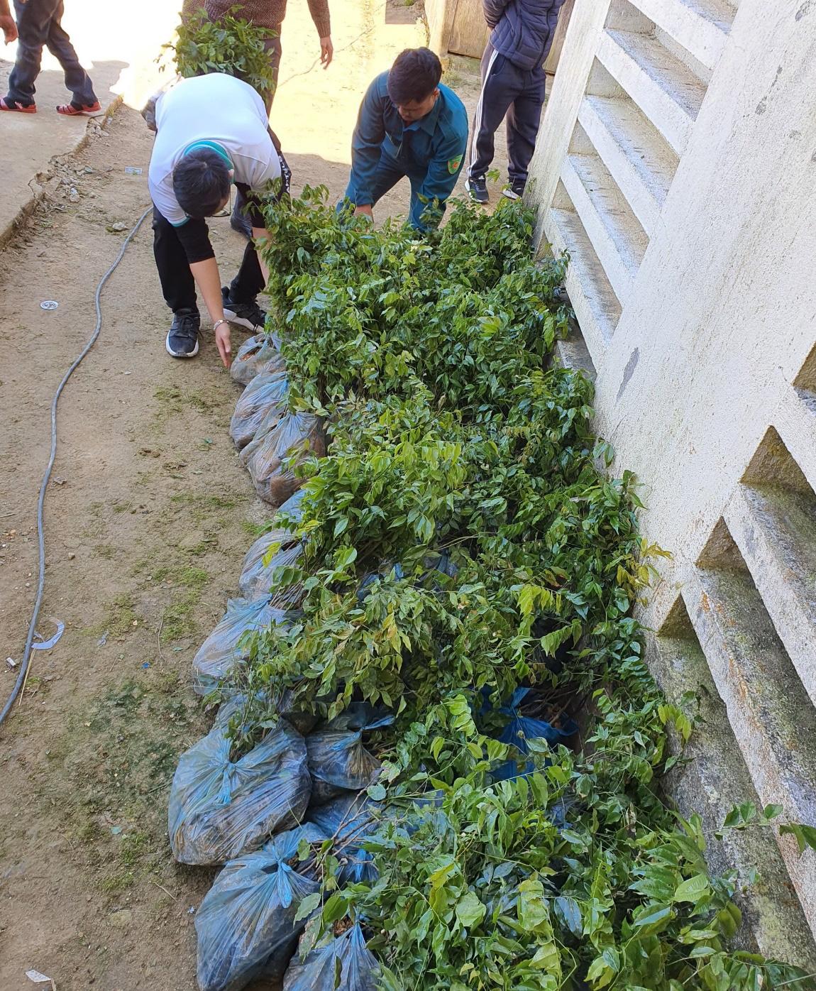 Trồng hàng ngàn cây xanh trên đất Quảng Nam để bảo vệ môi trường - Ảnh 2.