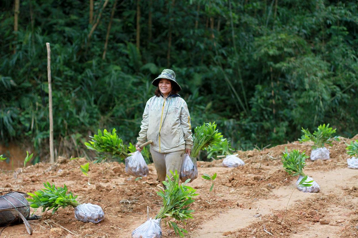 Trồng hàng ngàn cây xanh trên đất Quảng Nam để bảo vệ môi trường - Ảnh 4.