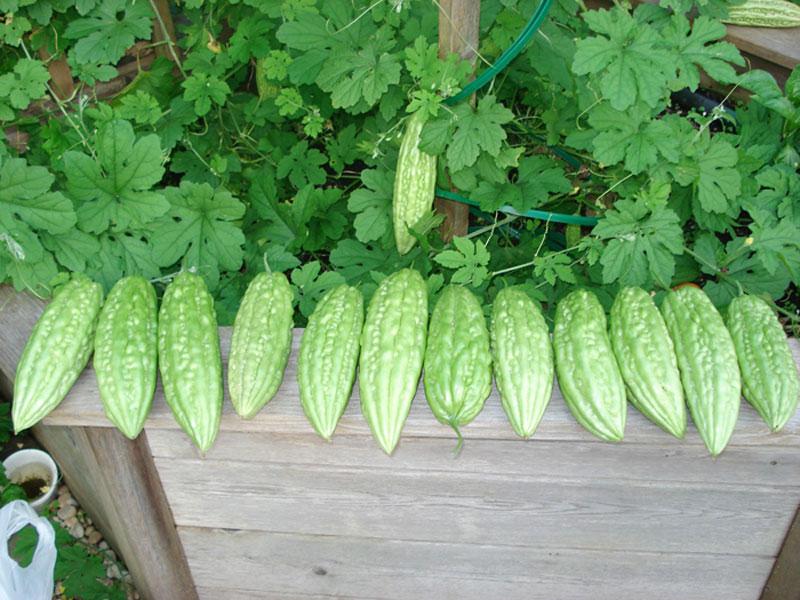 14 loại rau thích hợp để bạn có thể trồng vào tháng 4  - Ảnh 2.