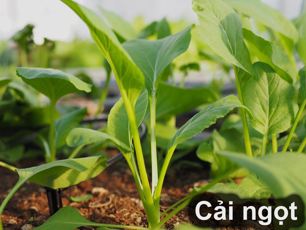 14 loại rau thích hợp để bạn có thể trồng vào tháng 4  - Ảnh 5.