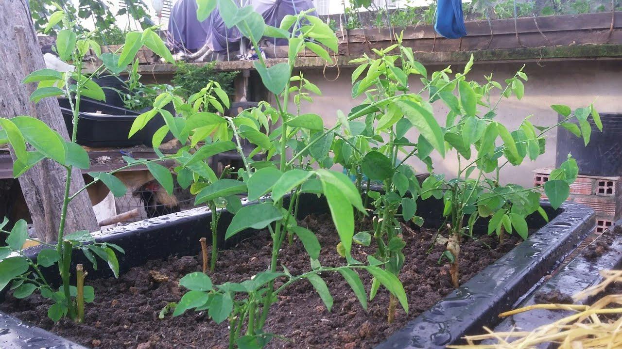 14 loại rau thích hợp để bạn có thể trồng vào tháng 4  - Ảnh 1.