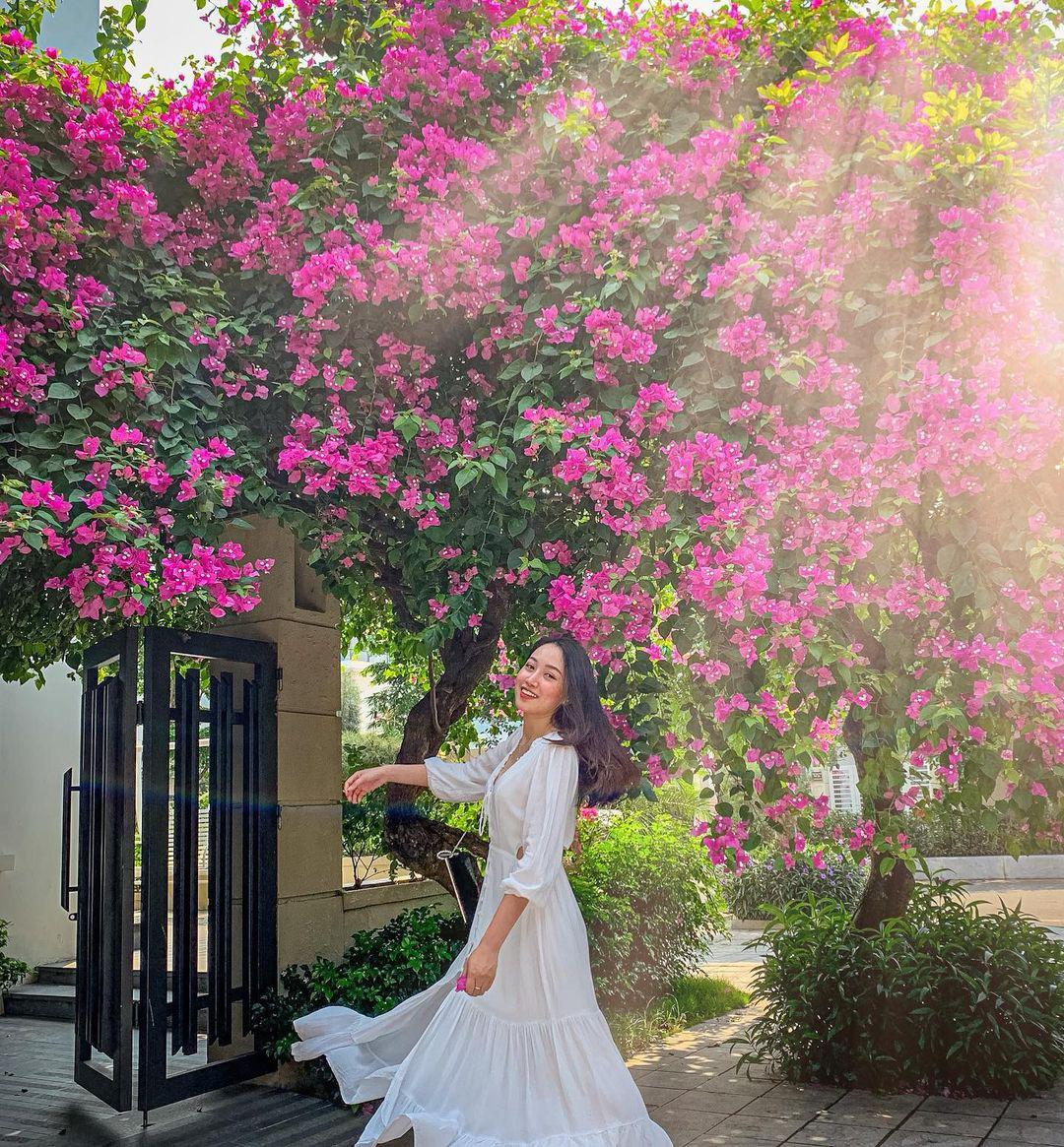 Giáng hương, tuyết sơn phi hồng và những mùa hoa đẹp ngây ngất tại chuỗi quần thể FLC - Ảnh 4.