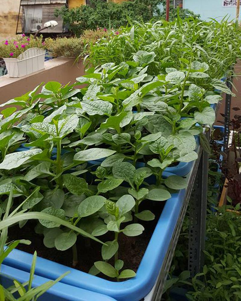 10 loại rau thích hợp để bạn có thể trồng vào tháng 4  - Ảnh 7.