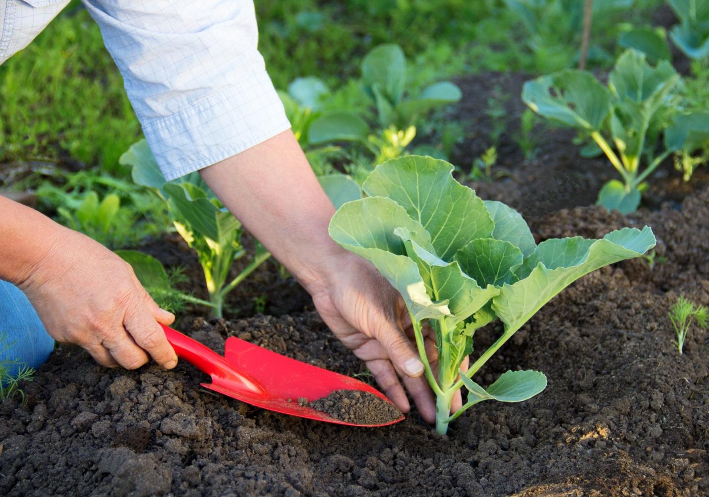 10 loại rau thích hợp để bạn có thể trồng vào tháng 4  - Ảnh 8.