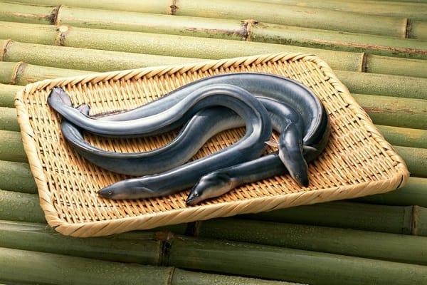 """Đây là loại thịt """"bổ hơn sâm"""" được Đông y coi trọng nhưng người Việt khi ăn thường phạm phải 3 việc khiến chúng sinh độc - Ảnh 1."""