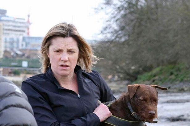 """Cái chết của chú hải cẩu 9 tháng tuổi khiến nước Anh thương tiếc: Bị chó dữ """"nhà giàu"""" tấn công dữ dội tạo nên cảnh hiện trường đẫm máu - Ảnh 7."""