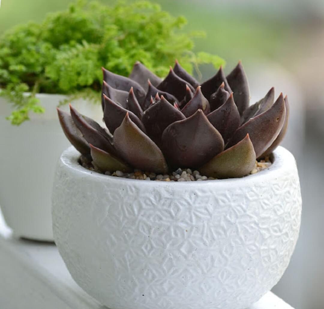 Mệnh Thổ trồng cây phong thủy gì trong nhà thì phù hợp nhất? - Ảnh 4.