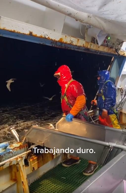 """Cảnh đánh cá """"sương sương"""" ngoài biển, chỉ dùng móc câu lên cũng hút 45 triệu lượt view TikTok - Ảnh 3."""