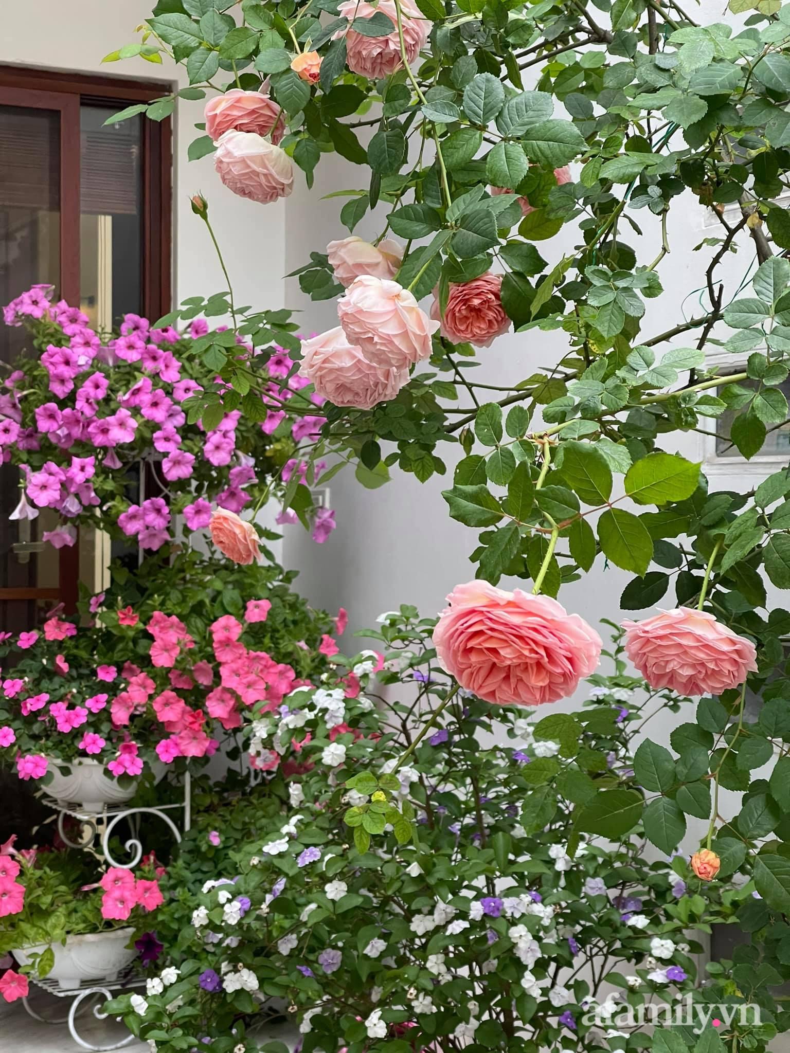 Người đàn ông dành cả bốn mùa phủ kín hoa rực rỡ quanh nhà ở Hà Nội - Ảnh 11.