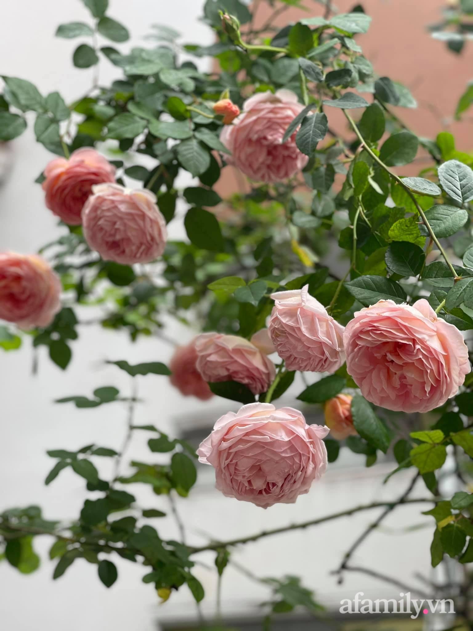 Người đàn ông dành cả bốn mùa phủ kín hoa rực rỡ quanh nhà ở Hà Nội - Ảnh 7.