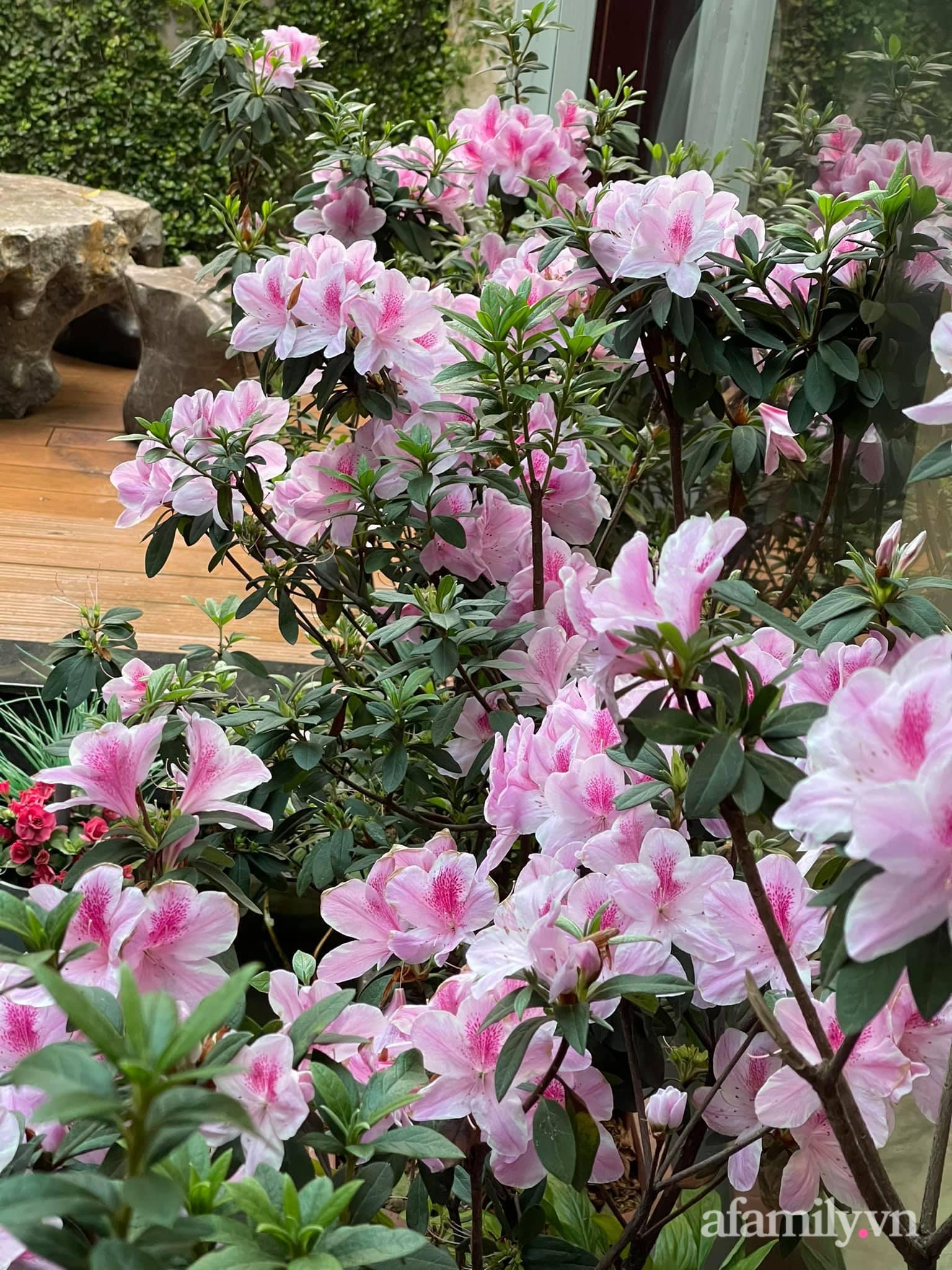 Người đàn ông dành cả bốn mùa phủ kín hoa rực rỡ quanh nhà ở Hà Nội - Ảnh 13.