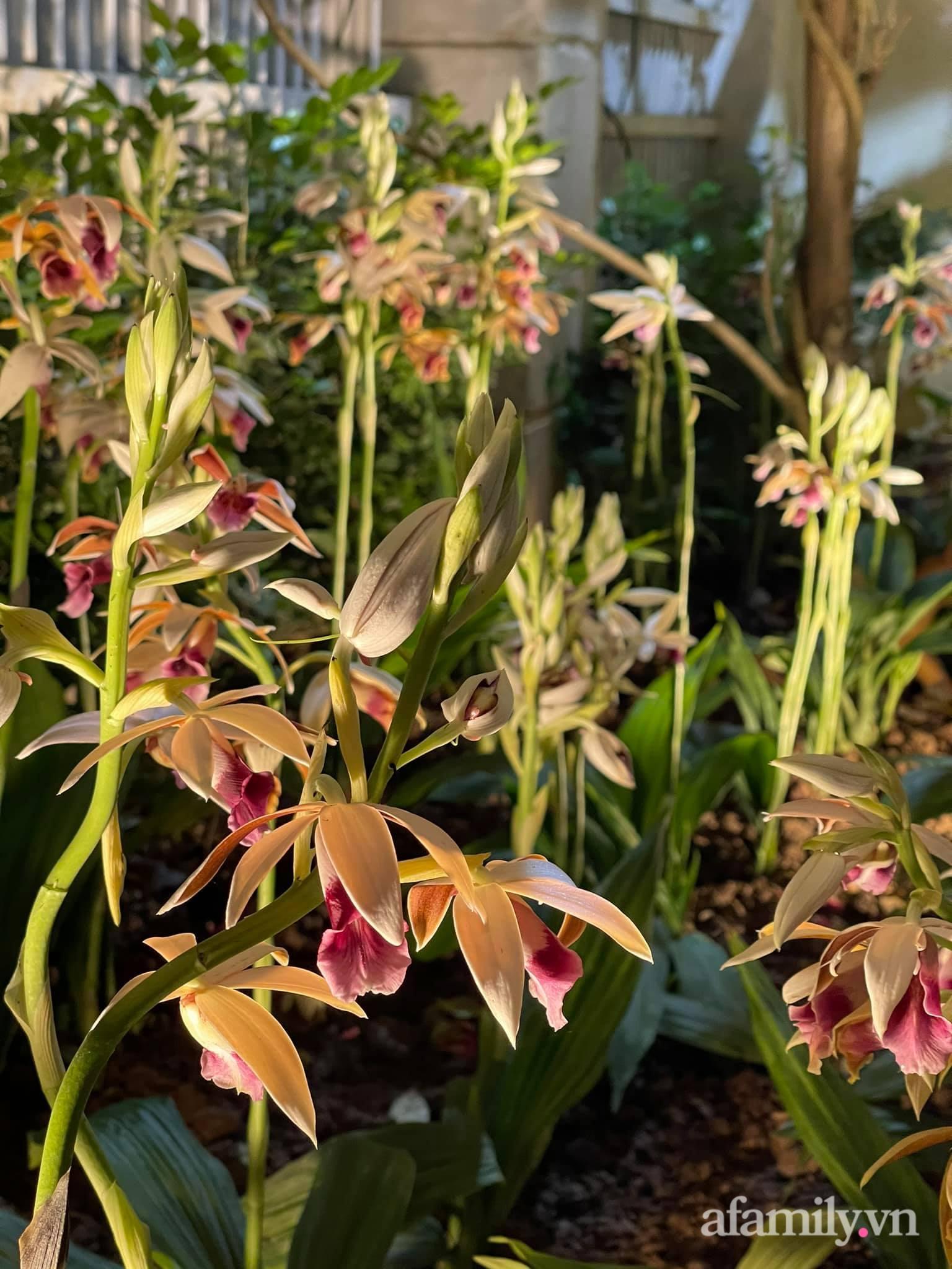 Người đàn ông dành cả bốn mùa phủ kín hoa rực rỡ quanh nhà ở Hà Nội - Ảnh 15.