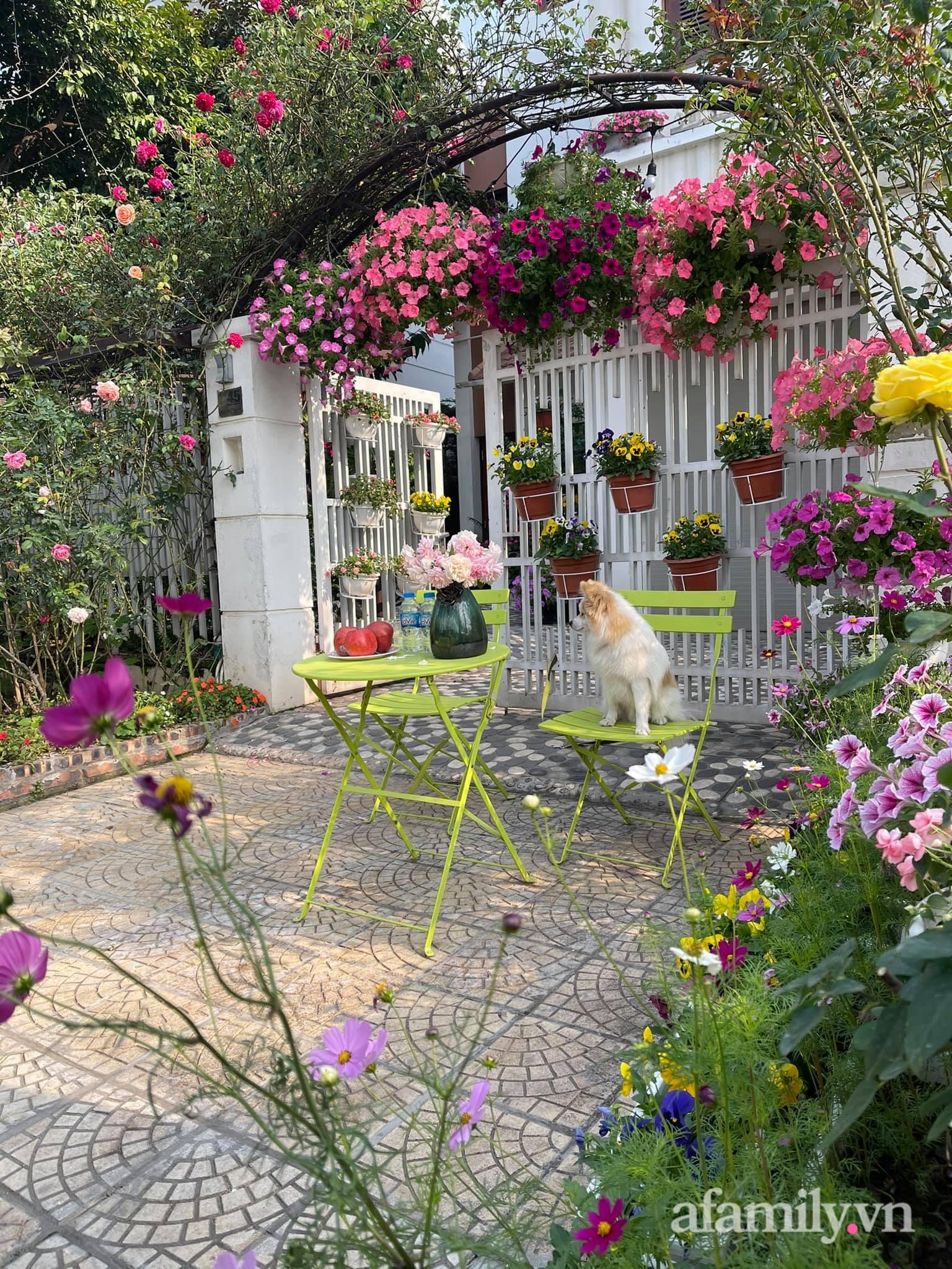 Người đàn ông dành cả bốn mùa phủ kín hoa rực rỡ quanh nhà ở Hà Nội - Ảnh 5.