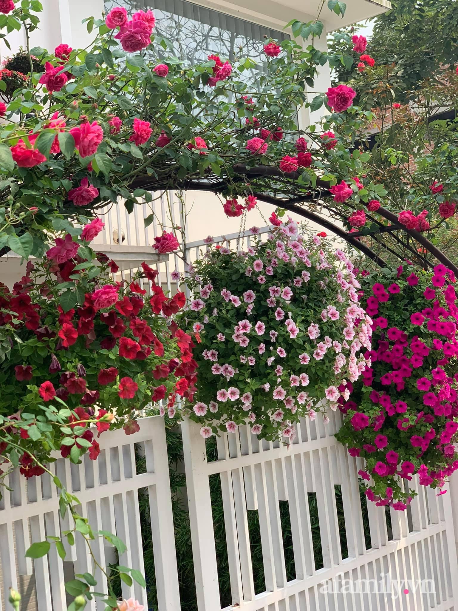 Người đàn ông dành cả bốn mùa phủ kín hoa rực rỡ quanh nhà ở Hà Nội - Ảnh 1.
