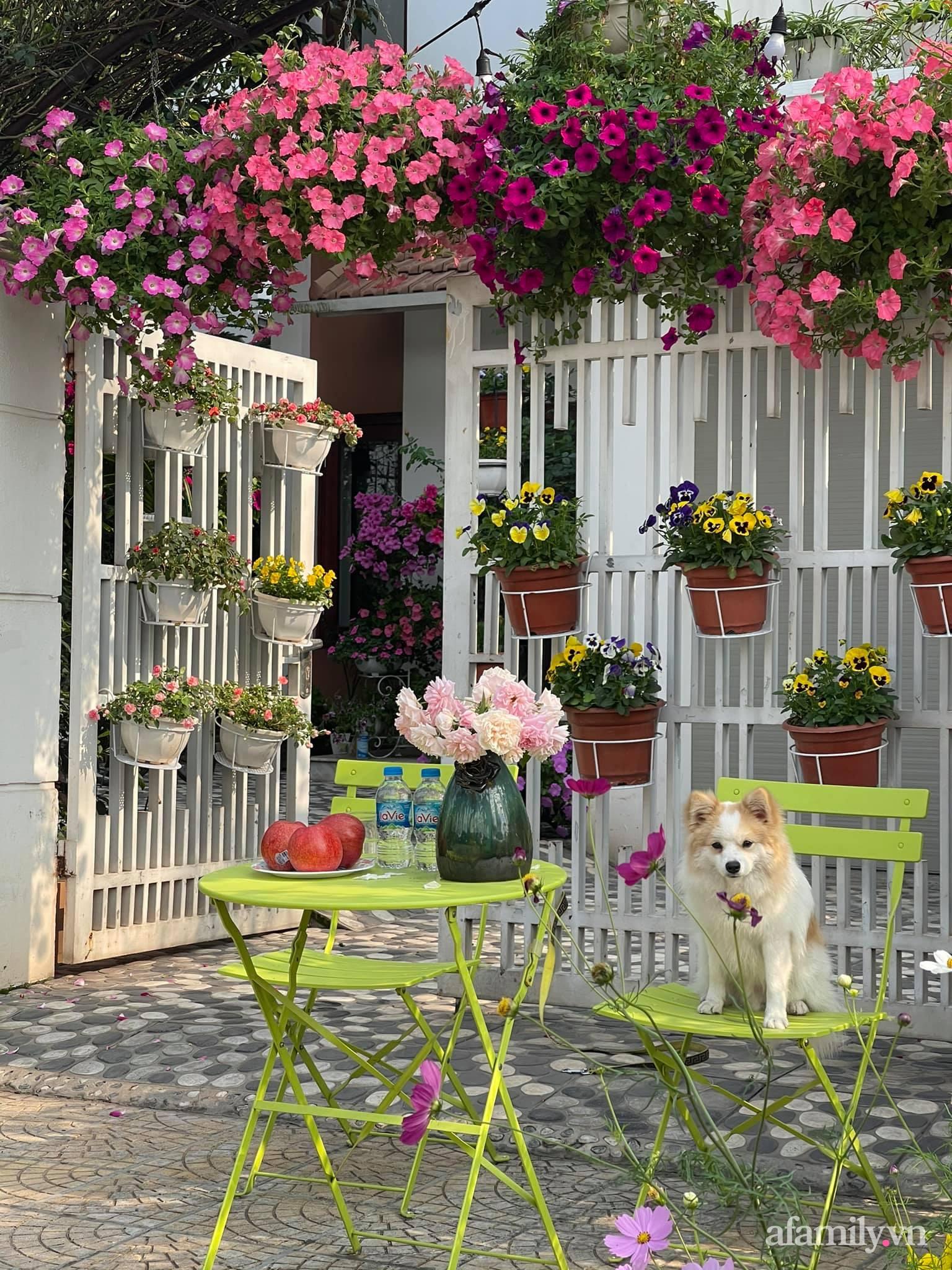 Người đàn ông dành cả bốn mùa phủ kín hoa rực rỡ quanh nhà ở Hà Nội - Ảnh 4.