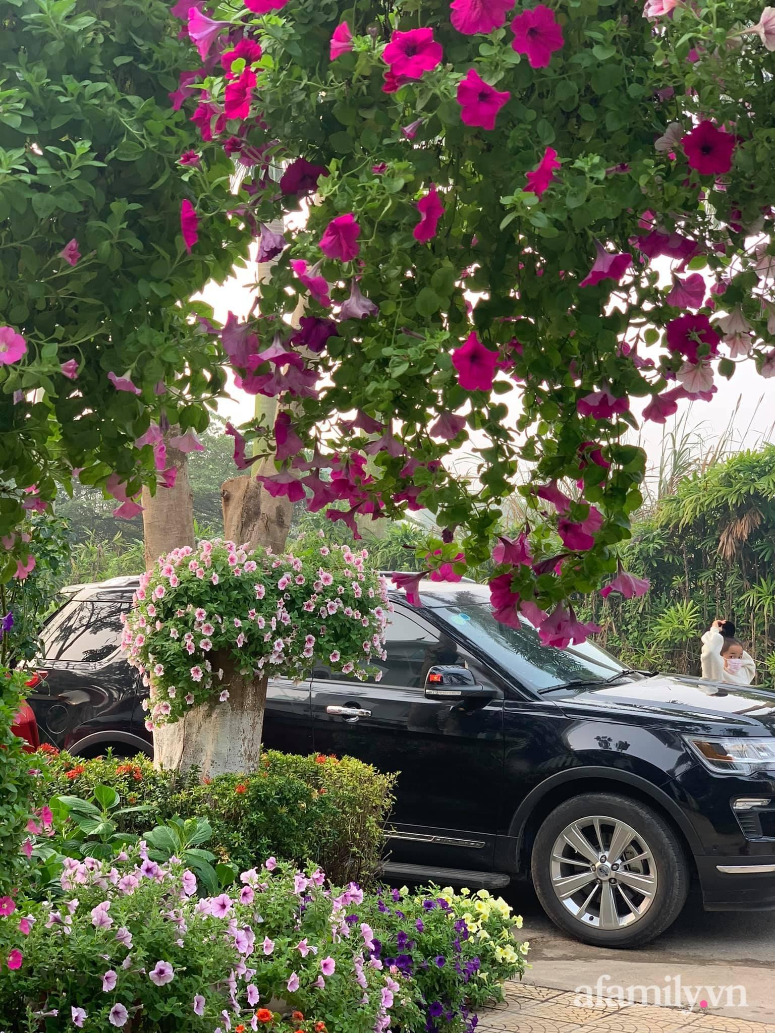 Người đàn ông dành cả bốn mùa phủ kín hoa rực rỡ quanh nhà ở Hà Nội - Ảnh 3.