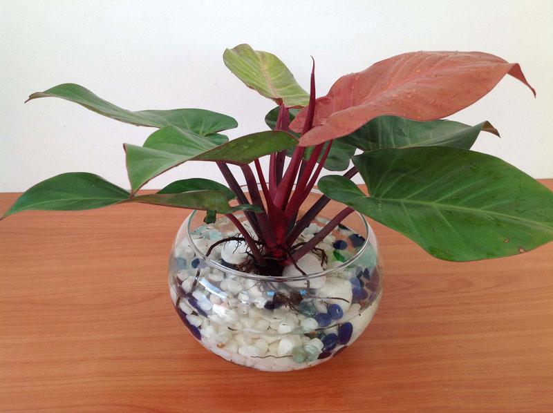 Mệnh kim nên bày những loại cây nào trong nhà thì hợp phong thủy? - Ảnh 4.